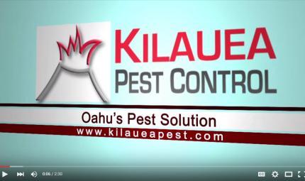Kilauea-Pest-Control-Bed-Bugs.jpg