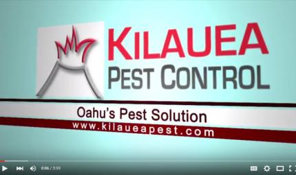Kilauea-Pest-Control-Business-Philosophy.jpg