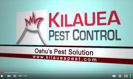 Kilauea-Pest-Control.jpg